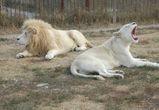 Воронежских журналистов оставили наедине со львами