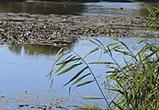 СК просит воронежцев помочь в расследовании дела об осушении озера Круглое