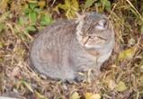 Владелец сетей пообещал спасти замурованную под теплотрассой кошку
