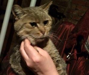 Воронежские зоозащитники сняли на видео спасение замурованной кошки Физы