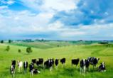 Израиль будет развивать молочный кластер в Воронежской области
