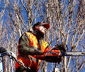 Директор фирмы в Воронеже пойдет под суд за браконьерство во время субботника