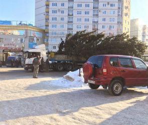 В Воронеже огромная елка оборвала провода