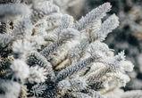 В Воронеже в ближайшие дни ожидается резкое похолодание