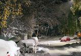 В Воронежской области подростки убили водителя, чтобы забрать его машину