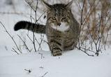 Выходные в Воронеже обещают быть снежными