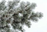 Праздничные выходные в Воронеже будут теплыми и снежными