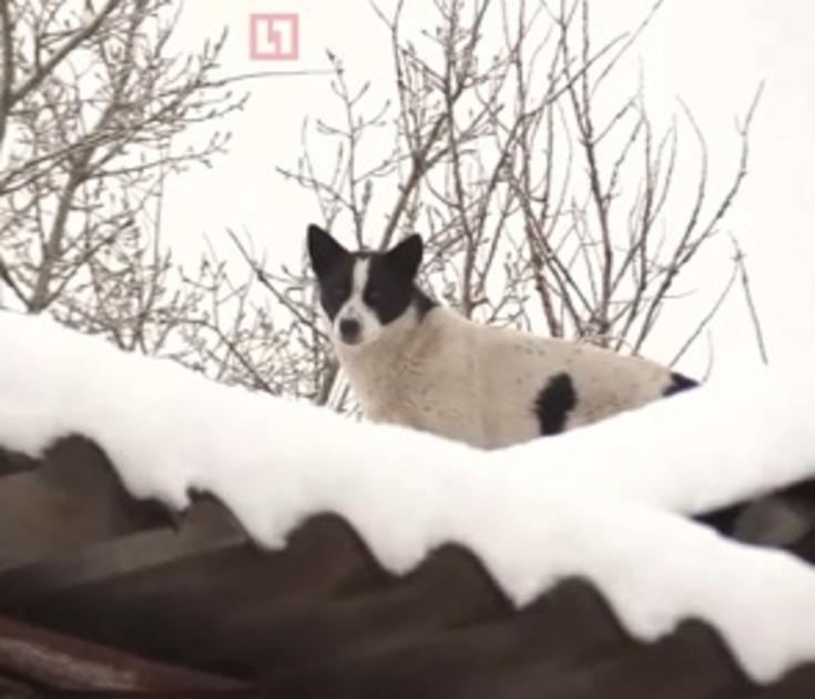 На видео попало спасение собаки, просидевшей месяц на крыше под Воронежем