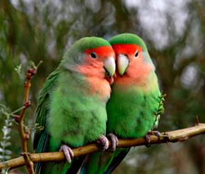 Прокуратура Воронежа требует усыпить всех птиц в зоопарке из-за птичьего гриппа