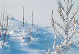 Первая рабочая неделя года в Воронеже будет холодной и снежной