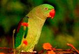 Воронежцы предлагают создать петицию против усыпления птиц из зоопарка