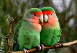 Сотрудники Воронежского зоопарка усыпили 141 птицу