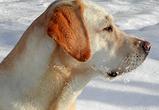 В Воронеже пройдет ярмарка охотников и рыболовов с выставкой охотничьих собак