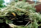 У рецидивиста из воронежского села полиция нашла почти полкилограмма марихуаны
