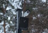 В восьми воронежских парках установили новые камеры видеонаблюдения