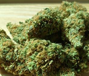 Полиция разбирается с воронежцем, хранившим дома «для себя» 2,5 кг наркотиков