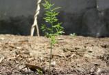 В Воронежской области компания незаконно использовала сельхозземли