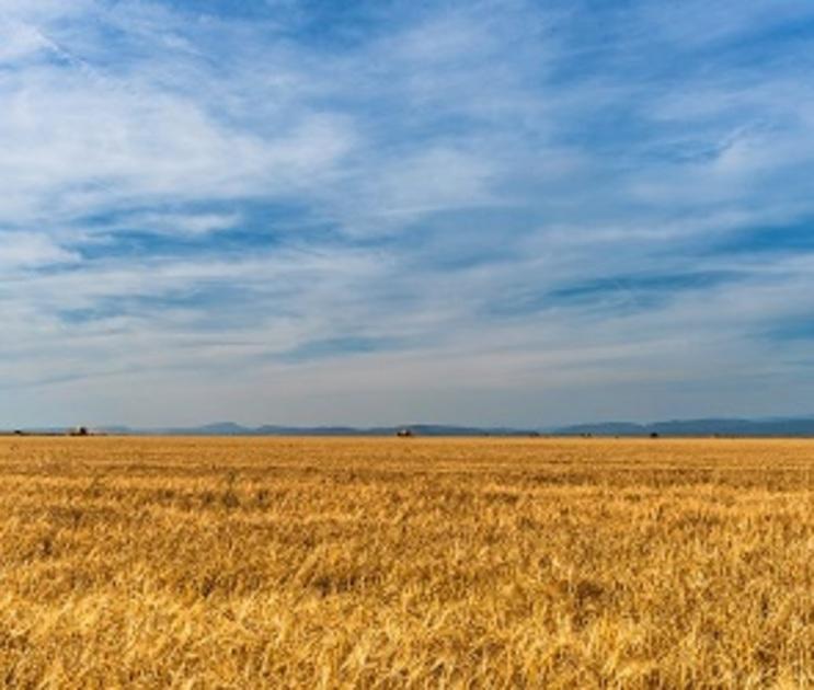Воронежцы заплатили 10 млн рублей за нарушения при использовании земли