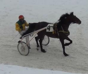 Воронежский жеребец выиграл зимние бега в Москве
