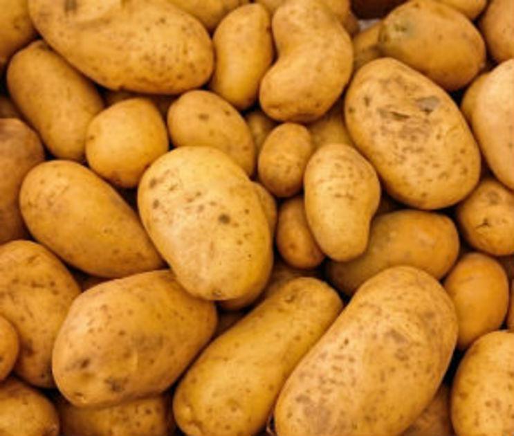 Воронежская область стала лидером по сбору картофеля в России в 2016 году