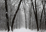 Около села под Воронежем в мороз заблудился мужчина и умер от обморожения