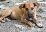 В Воронеже экологи и полиция ищут живодеров, убивших и разделавших собаку