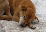 В воронежских парках находят куски фарша с ядом для собак
