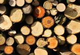 Под Воронежем браконьер нарубил деревьев на 270 тысяч рублей и продал как дрова