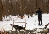 В парке Олимпик в Воронеже огромная гнилая береза едва не убила лыжника