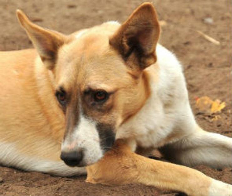 Воронежцы спасли собак, провалившихся в заброшенный погреб 4 дня назад