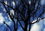 В Центральном районе Воронежа вырубят около сотни деревьев