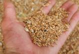 В Воронежской области компания ввезла опасное зерно без санитарного досмотра
