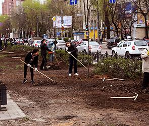 Воронежцев приглашают озеленить город и высадить бесплатные саженцы во дворах
