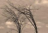 МЧС: В Воронеже и области ожидается усиление ветра