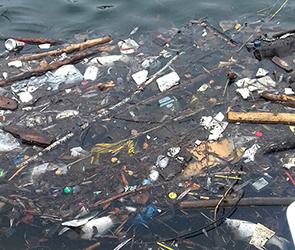 Лебединое озеро в Воронеже превратилось в зловонный водоем с мертвой рыбой