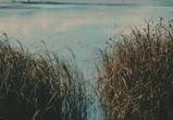 Под Воронежем тело пропавшей женщины нашли в реке