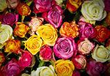 В Воронеже подростки подарили знакомым 40 украденных роз