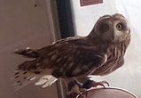 Воронежцы опубликовали фото совы, ехавшей в маршрутке в школу Хогвартс