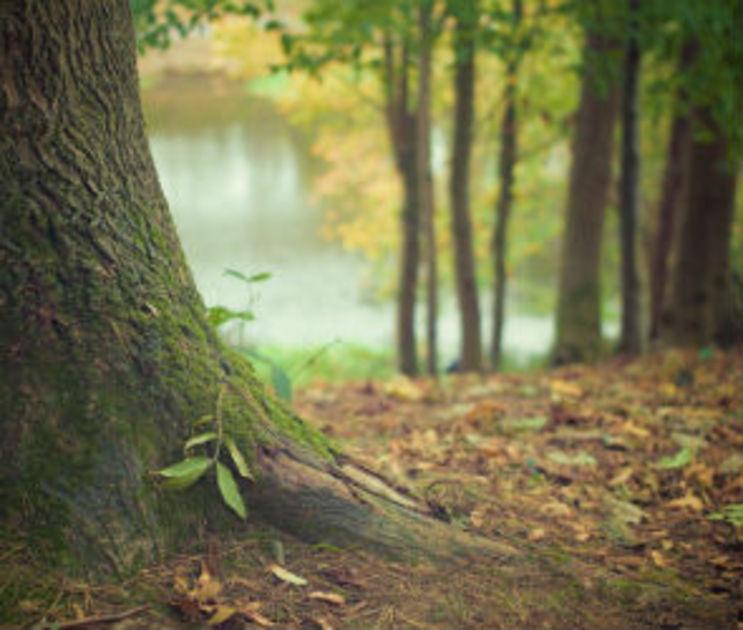 В Ботаническом саду ВГУ появится «Зеленый амфитеатр»