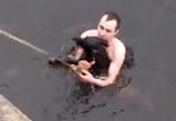 Воронежцы записали видео спасения тонущей дворняжки в водохранилище