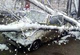 Воронежским спасателям поступило более 50 заявок по поваленным деревьям