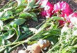 Неизвестные раскопали могилу и разбросали останки трупа в Воронежской области