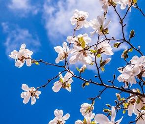 Последняя неделя апреля будет солнечной и теплой