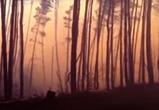 В Воронеже сняли на видео крупный ландшафтный пожар между двумя селами