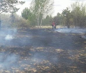 Шашлычники устроили большой пожар на пляже в Воронеже и сбежали, потеряв паспорт