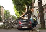 В центре Воронеже огромное ветхое дерево рухнуло на Хендай и повредило его