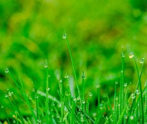 Всю неделю после праздников в Воронеже будет холодно и дождливо