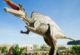 6 причин посетить «Юркин парк» в Воронеже