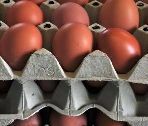 В области откроют новую птицефабрику, производящую 500 миллионов яиц в год