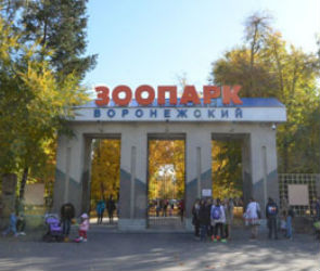 18 мая воронежцы смогут посетить зоопарк бесплатно